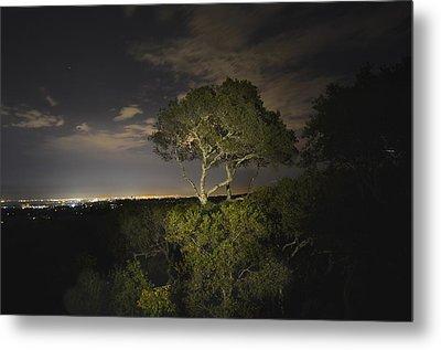 Night Glow Of A Tree Metal Print