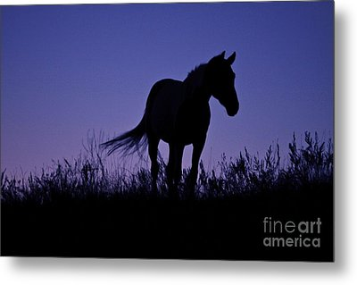 Nights Of Freedom Metal Print by Kate Purdy