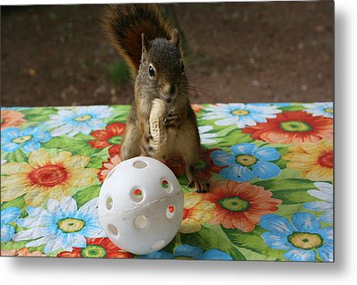 Metal Print featuring the photograph Ninja Squirrel by Paula Brown
