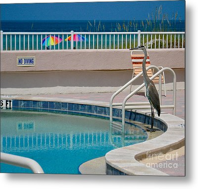 No Diving Metal Print