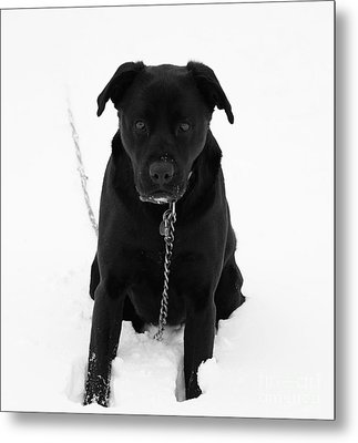 Metal Print featuring the photograph No Snow Here by Julie Clements
