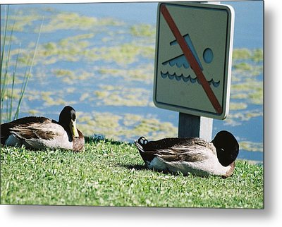 Metal Print featuring the photograph No Swimming by Kerri Mortenson