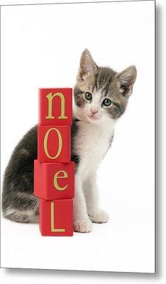 Noel Kitten Metal Print by Greg Cuddiford