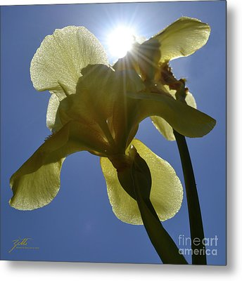 Noni's Light Metal Print