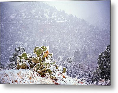 Nopal In Snow Metal Print by Anthony Citro