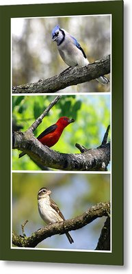 North American Songbirds Metal Print by Christina Rollo
