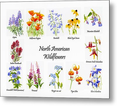 North American Wildflowers Poster II Metal Print