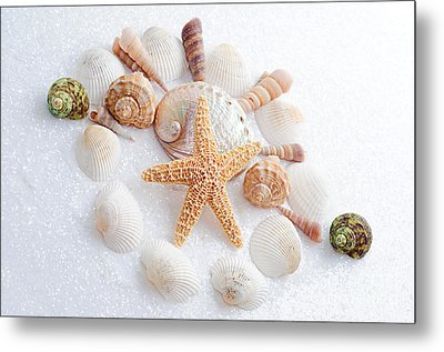 North Carolina Sea Shells Metal Print by Andee Design