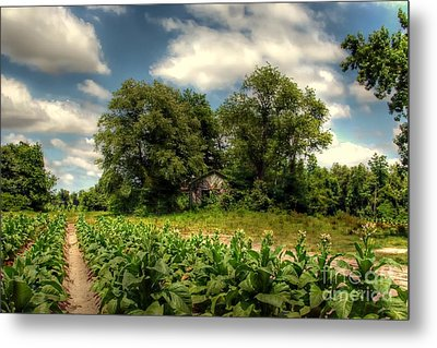 North Carolina Tobacco Farm Metal Print