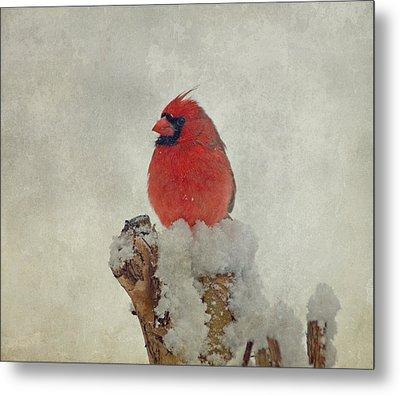 Northern Cardinal Metal Print by Sandy Keeton