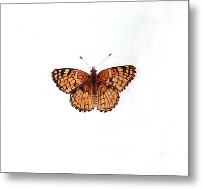 Northern Checkerspot Butterfly Metal Print by Inger Hutton