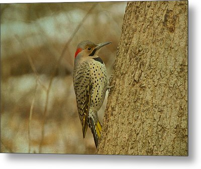 Northern Flicker On Tree Metal Print