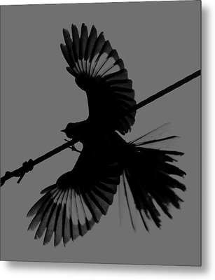Metal Print featuring the photograph Northern Mockingbird by Leticia Latocki