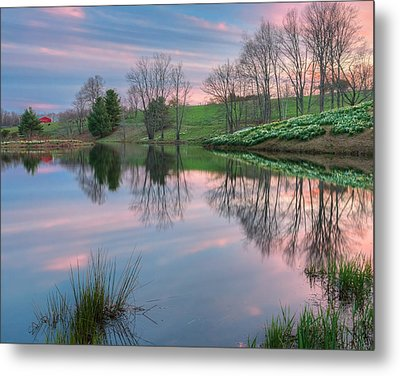 Northfield Daffodils Sunset Metal Print by Bill Wakeley