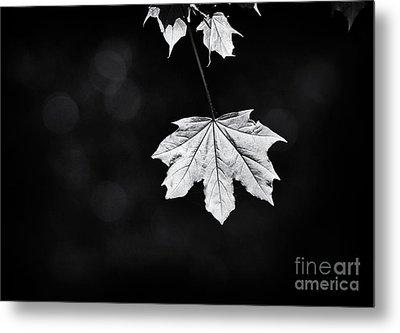 Norway Maple Leaf Monochrome Metal Print by Tim Gainey