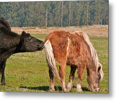 Nosey Metal Print by K L Kingston
