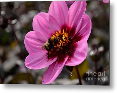 Nosy Bumble Bee Metal Print