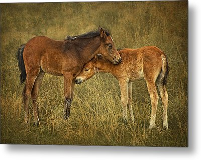 Not So Wild Wild Horses Metal Print by Priscilla Burgers