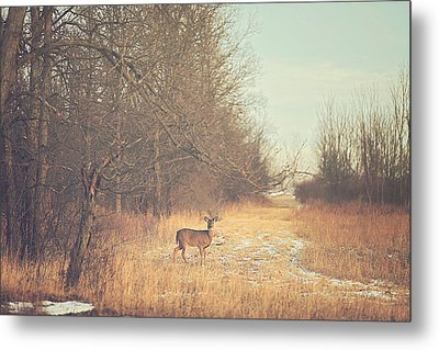 November Deer Metal Print by Carrie Ann Grippo-Pike