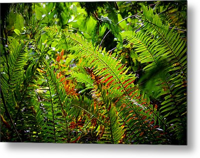Metal Print featuring the photograph November Ferns by Adria Trail