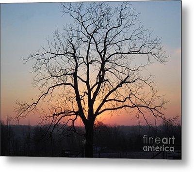 November Walnut Tree At Sunrise Metal Print