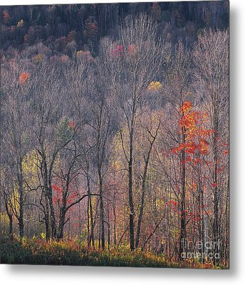 November Woods Metal Print by Alan L Graham