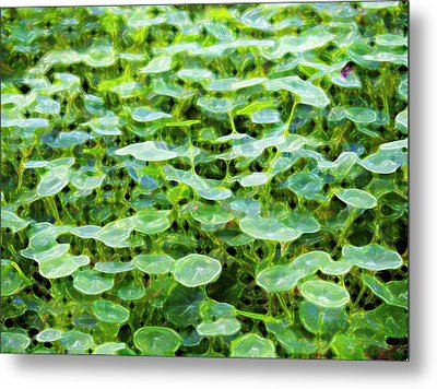 Nuanced Nasturtium Metal Print by Joe Schofield