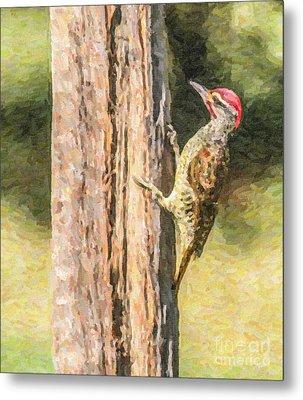 Nubian Woodpecker Campethera Nubica Metal Print by Liz Leyden