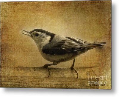 Nuthatch Metal Print by Amanda Collins
