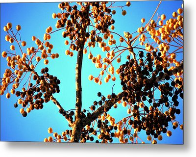 Nuts And Berries Metal Print by Matt Harang