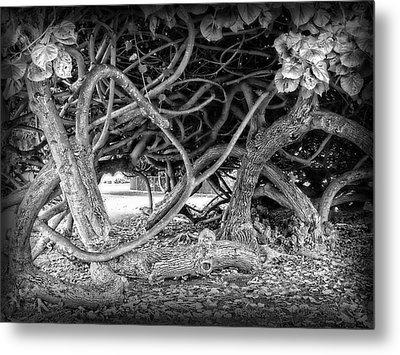 Oahu Ground Vines - Hawaii Metal Print by Daniel Hagerman