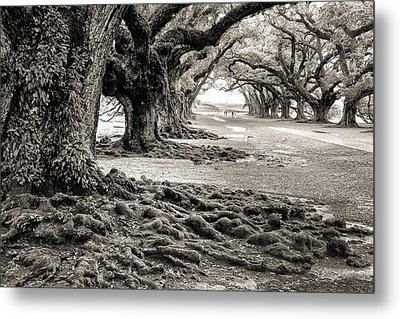 Oak Alley Metal Print by William Beuther