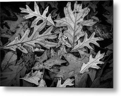Oak Leaf Patterns Metal Print by Randall Nyhof