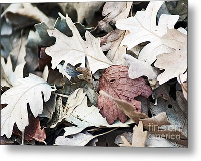 Metal Print featuring the photograph Oak Leaves In Fall by Gary Brandes