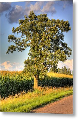 Oak Tree By The Roadside Metal Print
