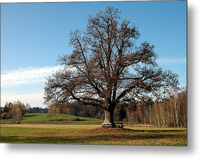 Oak Tree With Benches Metal Print