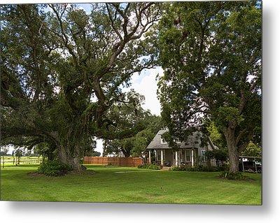 Oak Trees Around Country House Metal Print