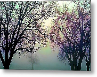 Oak Trees In The Mourning Myst Metal Print by Wernher Krutein
