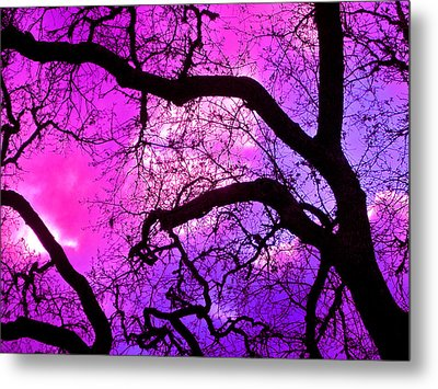 Oaks 17 Metal Print by Pamela Cooper