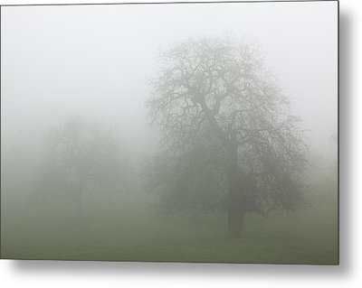 Metal Print featuring the photograph Oaks In Fog - Central California by Ram Vasudev