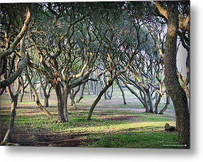Oaks Of Fort Fisher Metal Print by Phil Mancuso