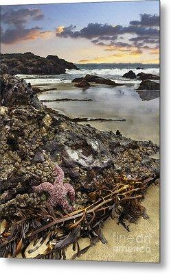 Ocean's Treasures Metal Print by Sharon Foster
