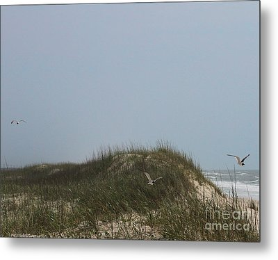 Ocracoke Dunes And Gulls Metal Print by Cathy Lindsey