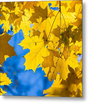 October Blues 8 - Square Metal Print by Alexander Senin