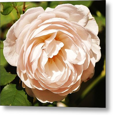 Metal Print featuring the photograph October Rose by Al Fritz