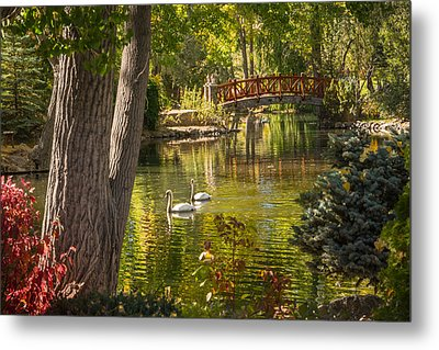 October Swans Metal Print by Janis Knight