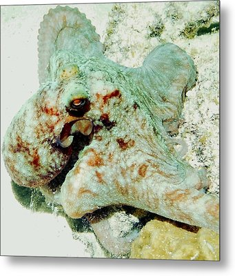 Octopus On The Reef Metal Print