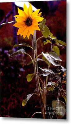 Ode To Sunflowers Metal Print by Patricia Keller