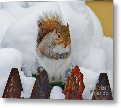 Oh No   Early Snow Metal Print by Judy Via-Wolff