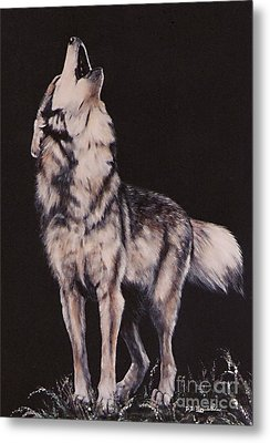 Metal Print featuring the painting Oh No....coyote Art by DiDi Higginbotham